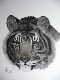 Tiger, Savanne, Gesicht, Natur