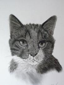Katze, Gesicht, Portrait, Augen