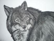 Zeichnung, Tiere, Portrait, Kohlezeichnung