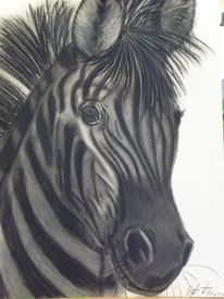 Kohlezeichnung, Zebra, Tiere, Portrait