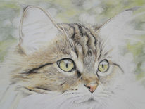 Katze, Main coon, Zeichnungen, Tiere