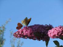 Schmetterling, Fotografie