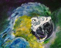 Vogel, Papagei, Malerei, Tiere