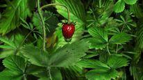 Erdbeeren, Waldmeister, Wald, Digitale kunst