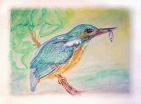 Eisvogel, Gewässer, Aquarellmalerei, Fisch