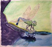 Seerosen, Tümpel, Wasser, Libelle