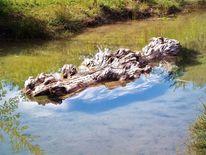 Wasser, Braun, Biotop, Ufer