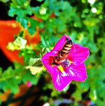 Bunt, Gelb, Biene, Blätter