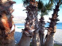 Strand, Boot, Blau, Palmen