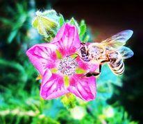 Blumen, Biene, Bunt, Knospe