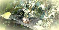 Spinnennetz, Grün, Beute, Natur