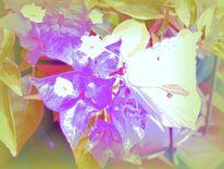 Violett, Schmetterling, Pink, Blumen