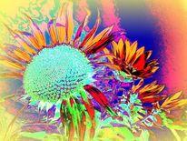Orange, Blüte, Rot, Sonnenblumen