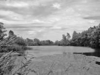 Grau, Weiß, Schwarz, Teich