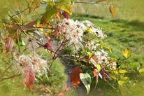 Herbst, Laub, Strauch, Sonnentag