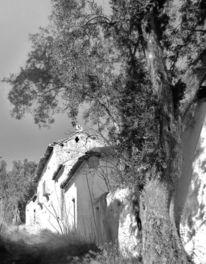 Vergangenheit, Schwarz weiß, Baum, Stille