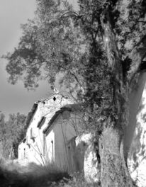 Baum, Stille, Verlassenes dorf, Ruine