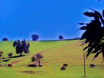 Weide, Gras, Blau, Kuh