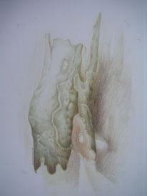 Fantasie, Naturstudie, Rinde, Zeichnung