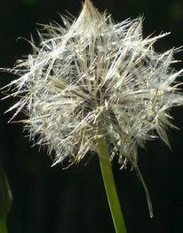 Blumen, Fotografie, Stillleben