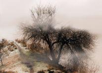 Fotografie, Rhein, Nebel