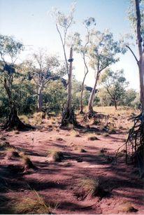 Flussbett, Outback,