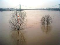 Überschwemmung, Rhein, Bäume im wasser, Rheinhochwasser2011 köln