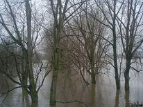 Bäme im wasser, Baum, Rhein, Rheinhochwasser2011 köln