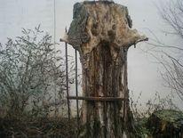 Baum, Alt, Zaun, Anrheiner