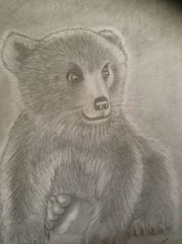 Bleistiftzeichnung, Kohlezeichnung, Bär, Zeichnungen