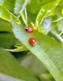 Insekten, Mai, Analog, Natur