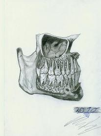 Knochen, Unterkiefer, Zähne, Zeichnung