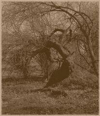 Analog, Botanik, Baum, Fotografie