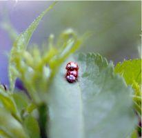 Sexualität, Käfer, Analog, Garten