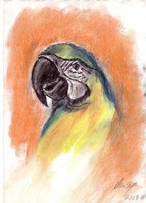 Vogel, Tierportrait, Tierzeichnung, Pastellmalerei