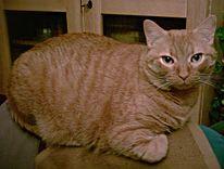 Fotografie, Katze, Tiere, Haustier