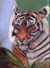 Portrait, Tiger, Tierportrait, Tiere