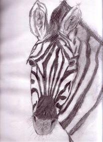 Tierportrait, Tierzeichnung, Portrait, Zebra