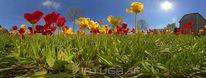 Stimmung, Tulpen, Perspektive, Farben