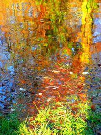 Reflexion, Wasser, Laub, Halle