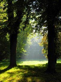 Saale, Herbst, Wald, Sonne