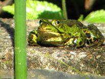 Frühling, Frosch, Stadtpark, Teich