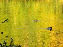 Ente, Herbst, Halle, Saale