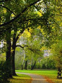 Halle, Parkanlage, Saale, Baum