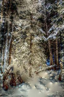 Schnee, Winter, Frost, Busch