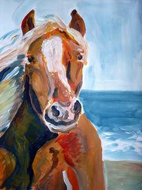 Strand, Hengst, Urlaub, Pferde