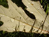Blätter, Lichteffekte makroaufnahme, Wiese, Tautropfen