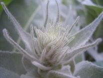 Pflanzen, Strauch, Makro, Natur