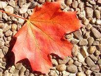 Stein, Natur, Herbst, Laub