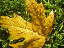 Blätter, Herbst, Gelb, Natur
